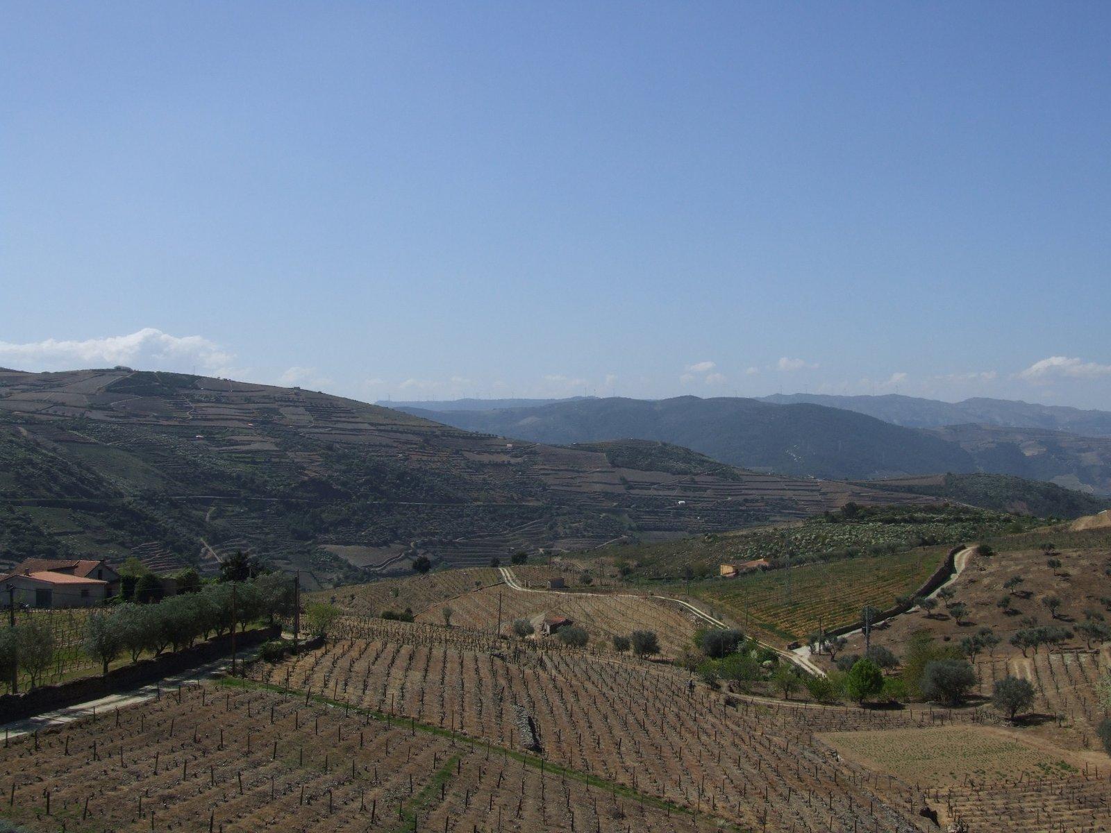 Nelson_Carvalheiro_Douro_Valley (6)