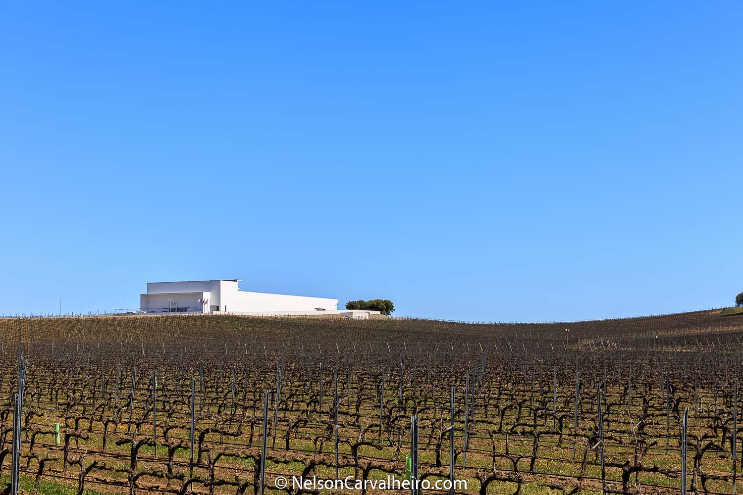 Nelson_Carvalheiro_Alentejo_Wine_Travel_Guide_Adega_Mayor-2