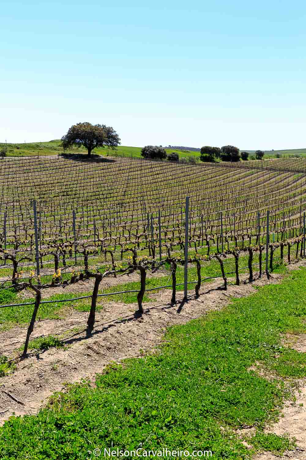 Nelson_Carvalheiro_Alentejo_Wine_Travel_Guide_Adega_Mayor-3