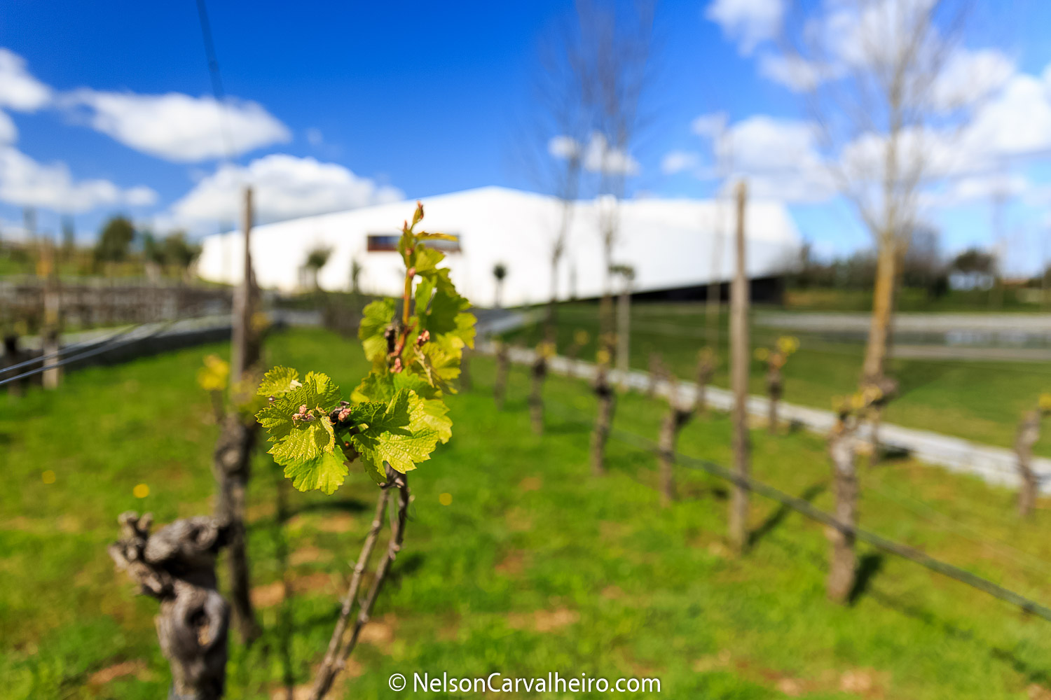 Nelson_Carvalheiro_Alentejo_Wine_Travel_Guide_L'AND-12