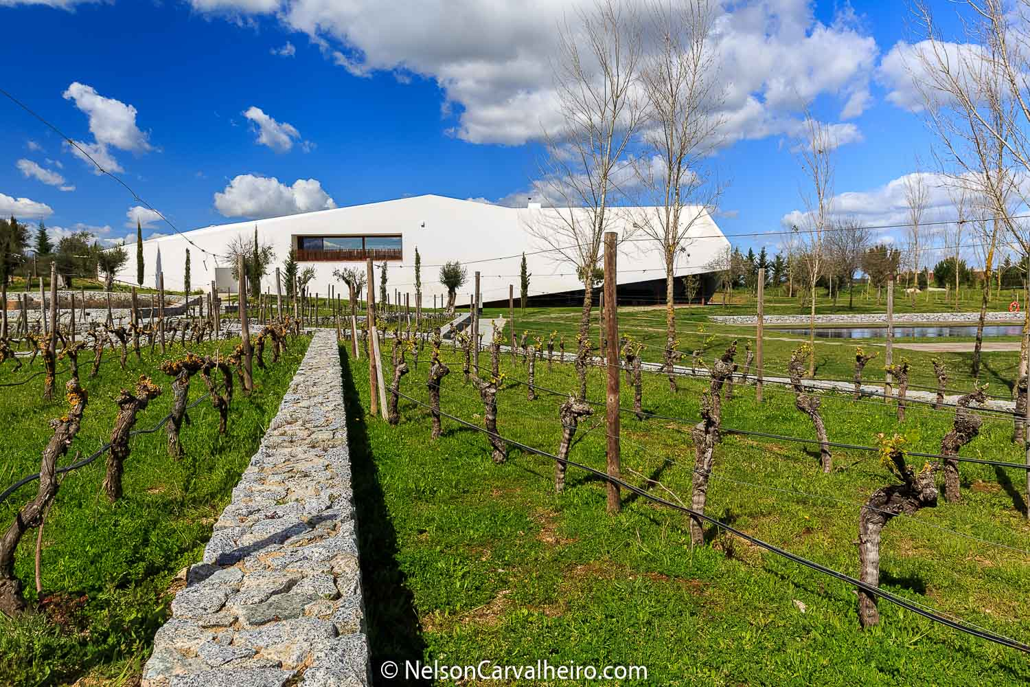 Nelson_Carvalheiro_Alentejo_Wine_Travel_Guide_L'AND-6